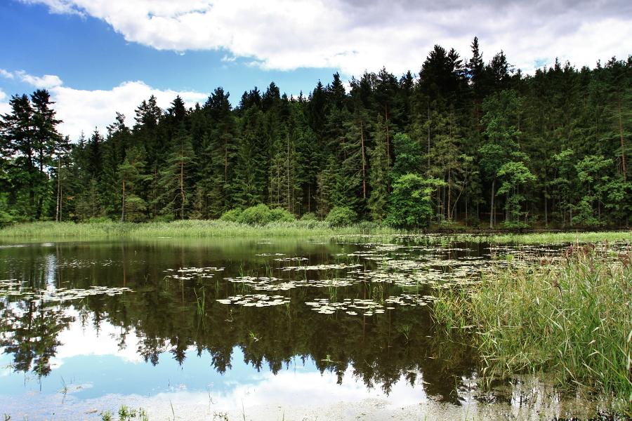 Kamenný rybník - Zdeněk Kučera