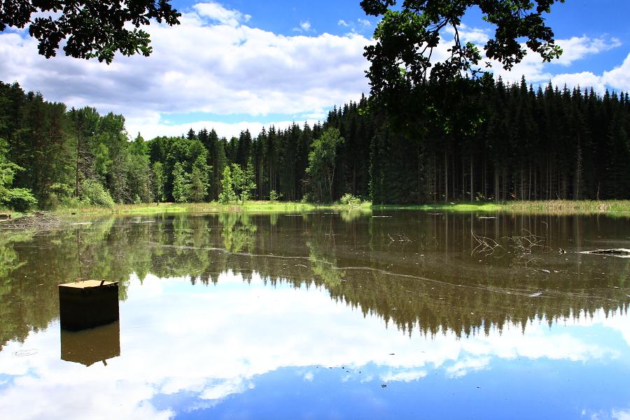 Přesličkový rybník - Zdeněk Kučera